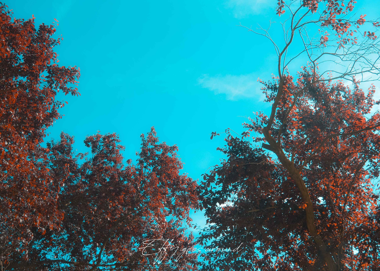 alberi con foglie rosse presso La Vigna di Ferrara per Interno verde