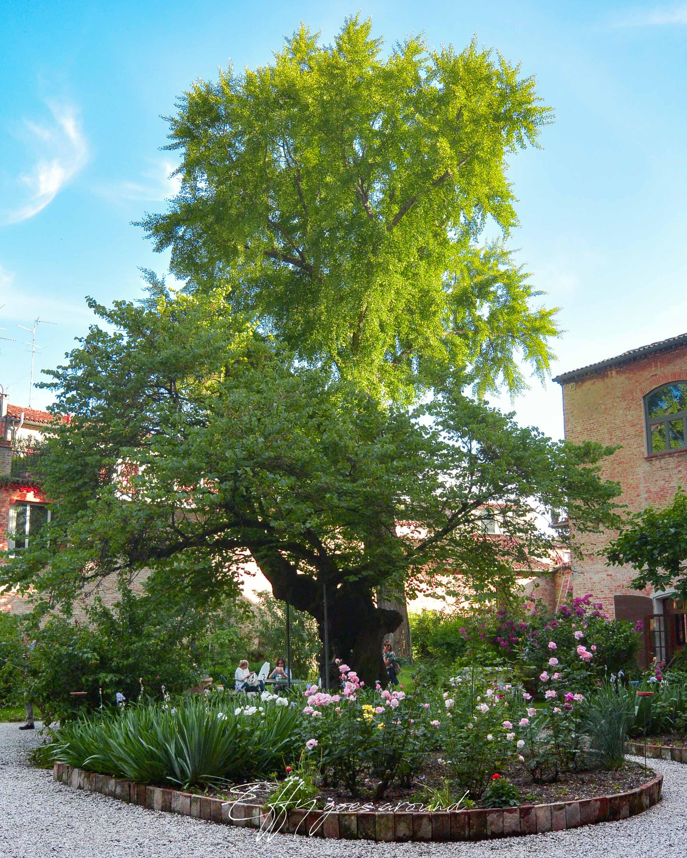aiuole, albero di Giuda, ginkgo biloba all'interno del giardino di via Terranuova a Ferrara per Interno verde