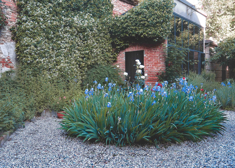 iris blu, rose bianche e rosse, gelsomino rampicante nel giardino di via Terranuova a Ferrara per Interno verde