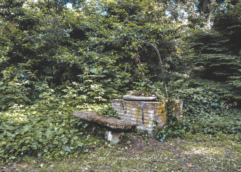 pozzo sovrastato da edera rampicante nel giardino di Palazzo Gatti Casazza a Ferrara per Interno verde