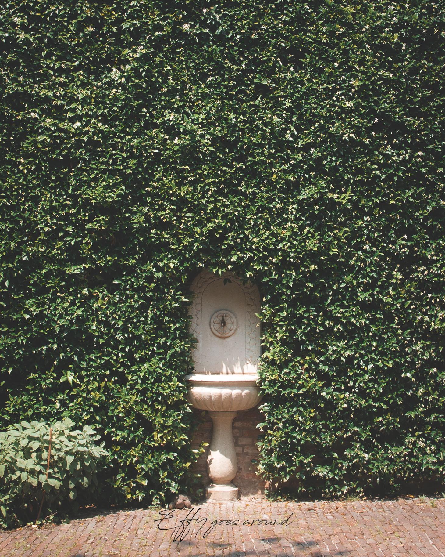fantana nella parete di gelsomino nel giardino di via Carlo Mayr a Ferrara per Interno Verde