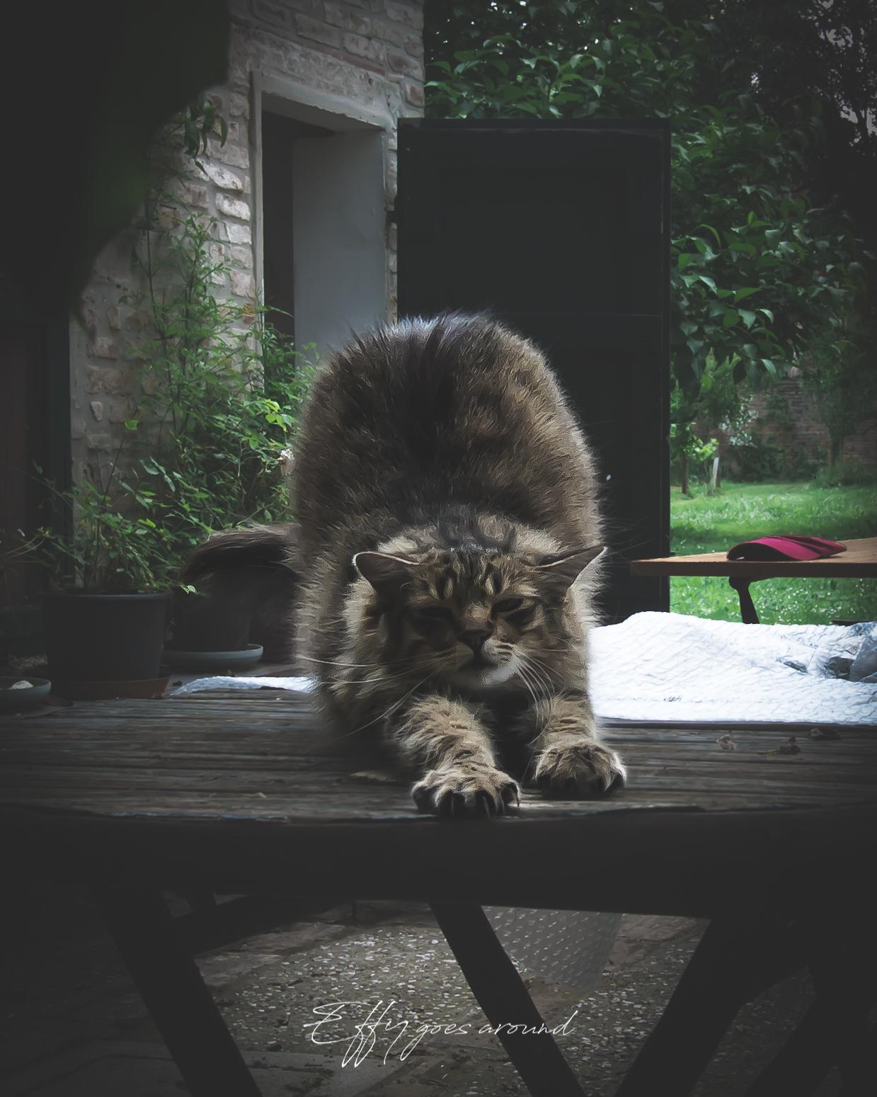 gatto che si stira nel giardino adiacente a vicolo del Parchetto a Ferrara per Interno Verde