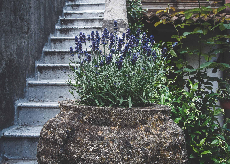 lavanda lungo la scala nel giardino di via Capo delle Volte a Ferrara per Interno Verde