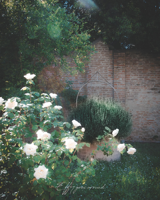 lavanda nel pozzo del giardino dell'Istituto San Vincenzo a Ferrara per Interno Verde