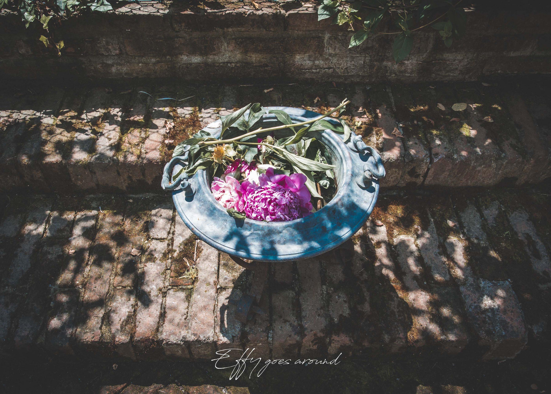 peonie nel giardino di Casa Minerbi a Ferrara per Interno Verde