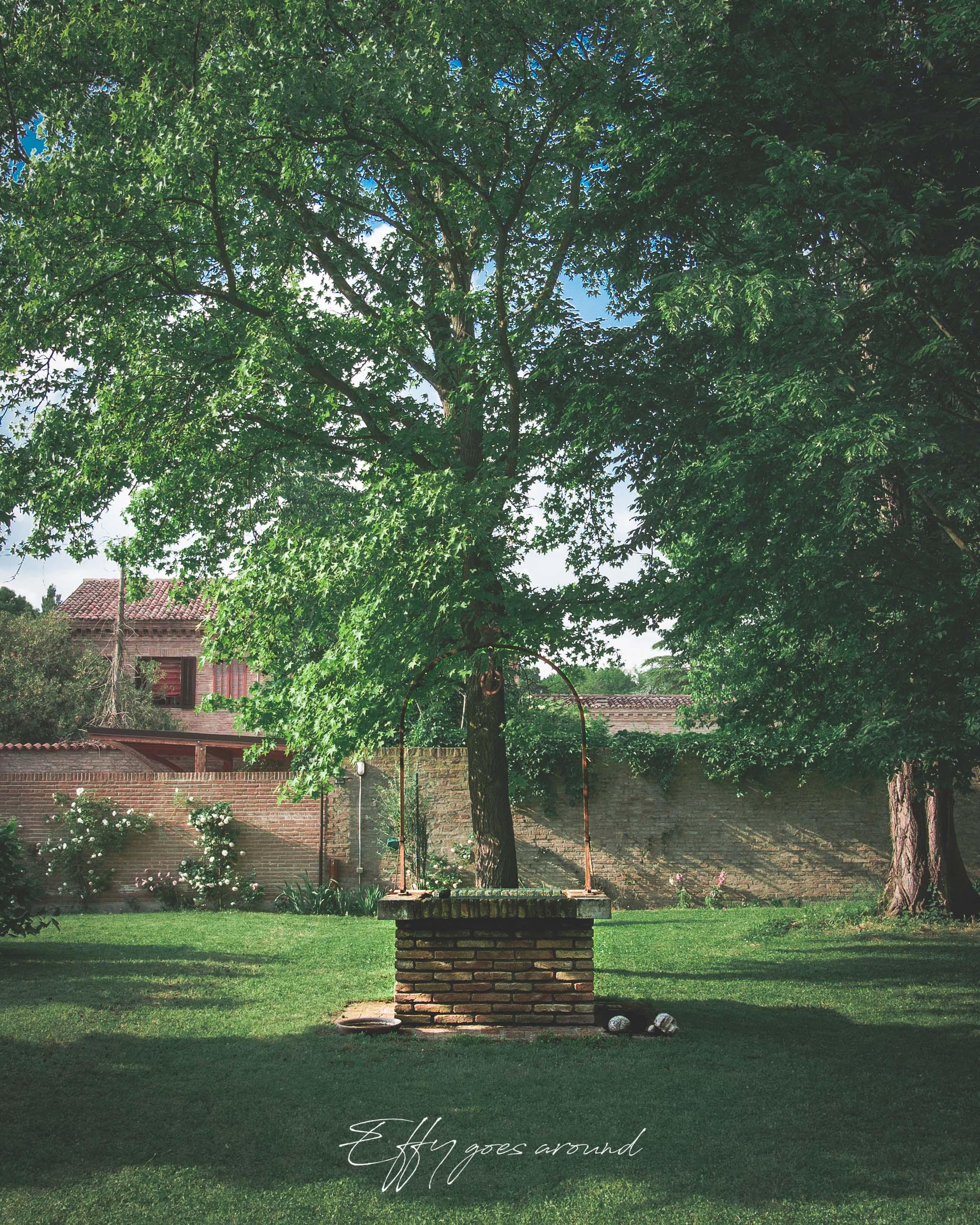 albero nel pozzo nel giardino di vicolo del Parchetto a Ferrara per Interno Verde