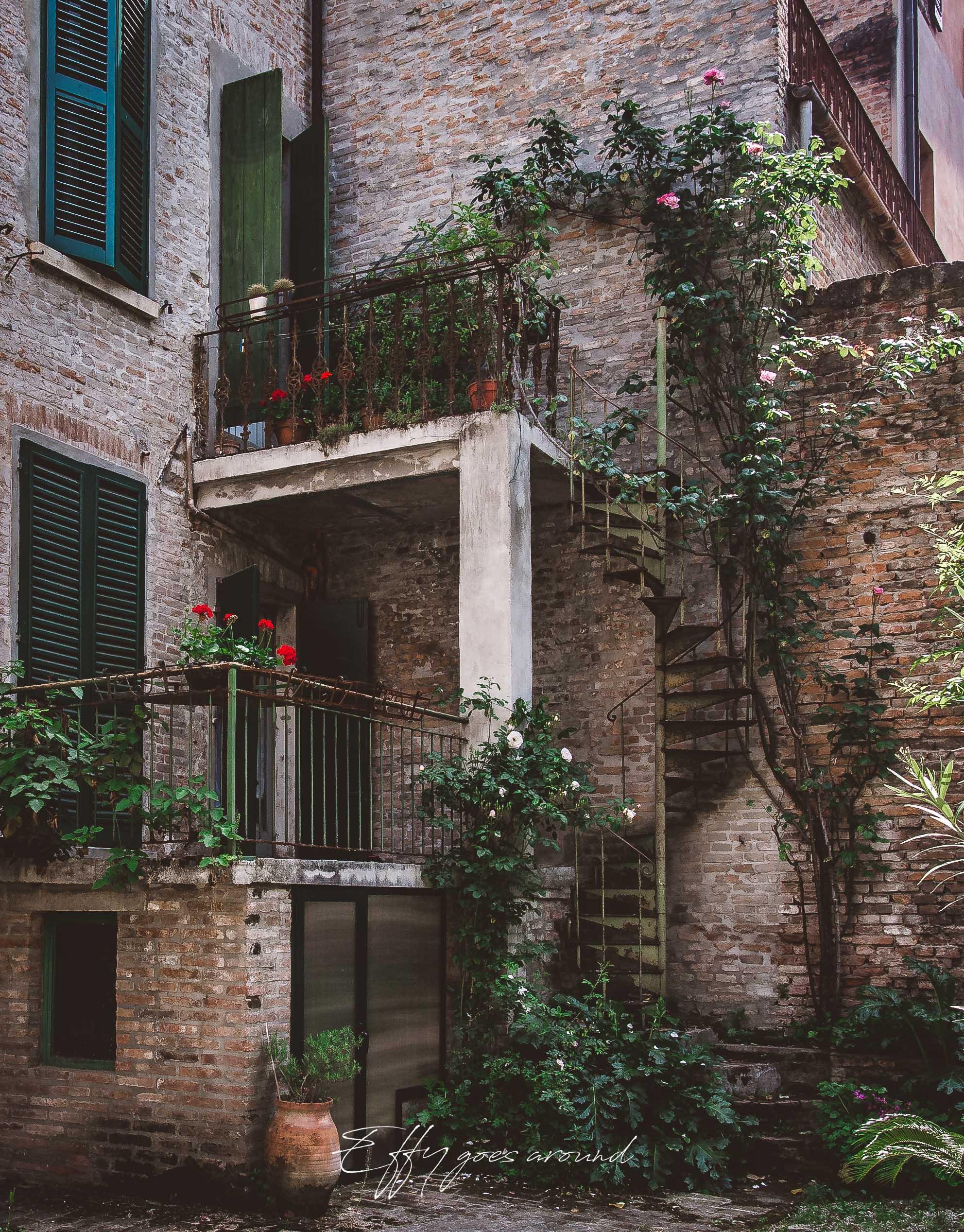 rosaio rampicante lungo la scala del giardino di via Savonarola a Ferrara per Interno Verde