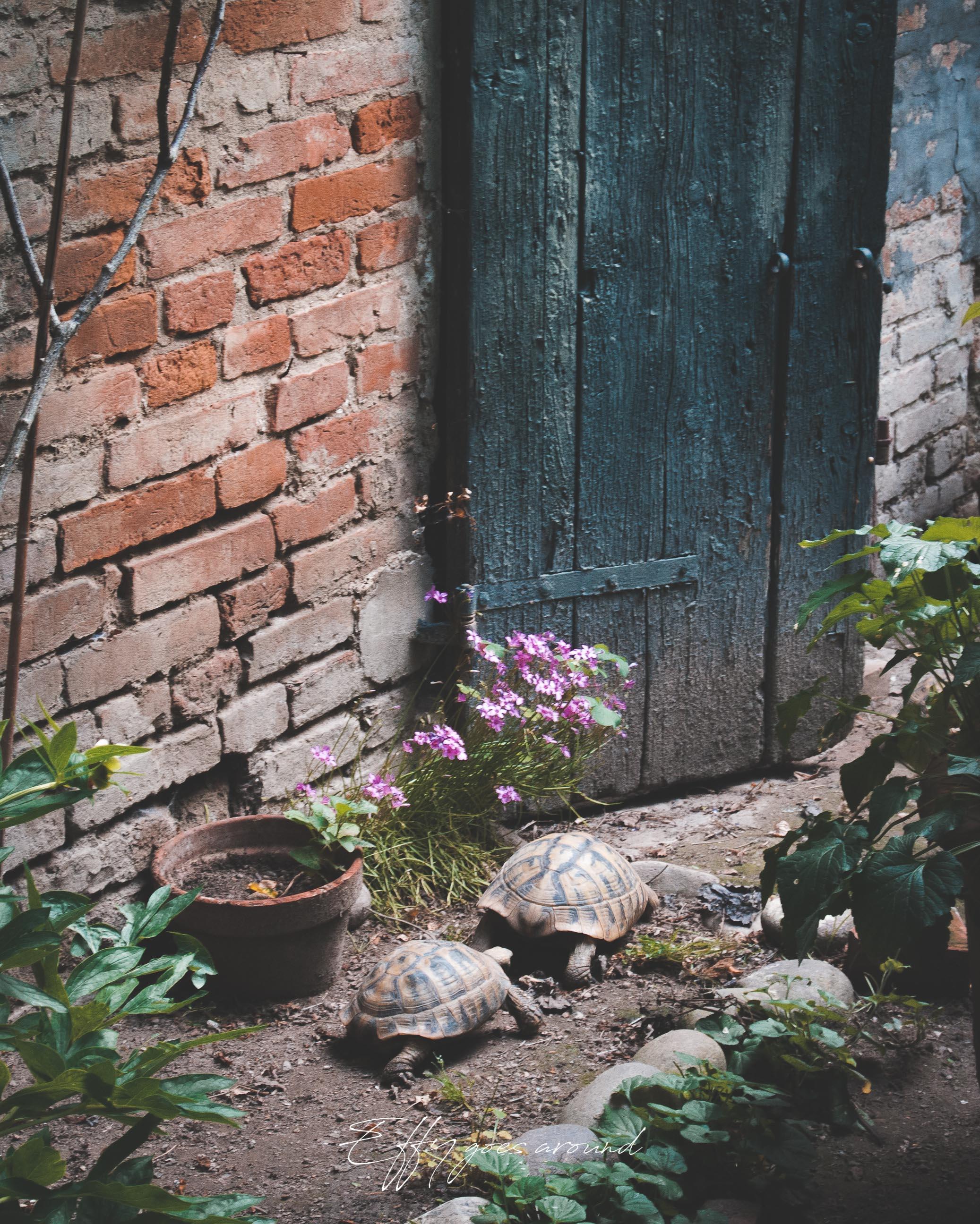 tartarughe nel giardino di via Campo Sabbionario a Ferrara per Interno Verde