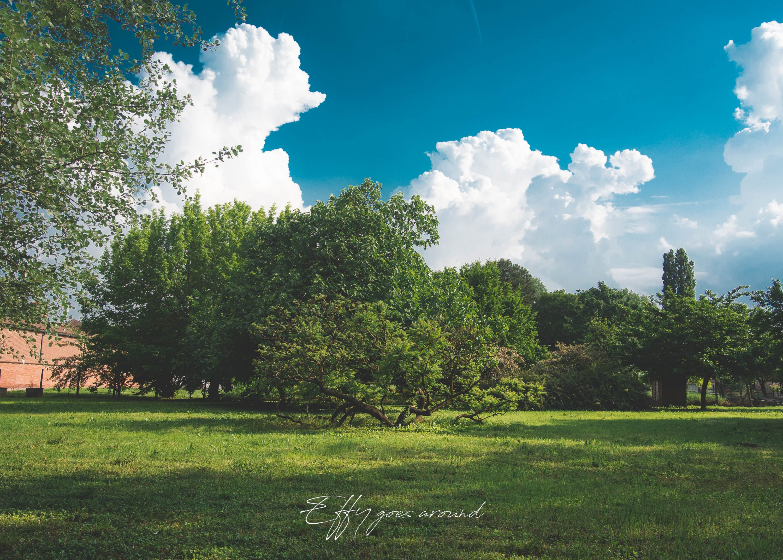 veduta presso il Tiro a Segno Nazionale di Ferrara per Interno Verde