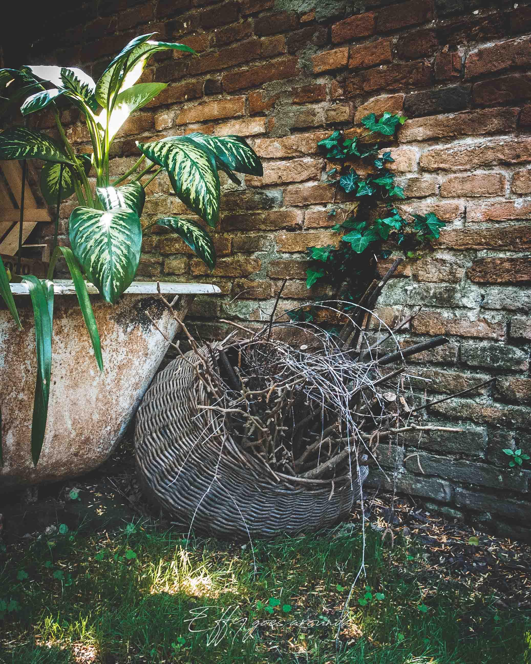 vasca da bagno con piante ed edera rampicante nel giardino di via Quartieri a Ferrara per Interno Verde