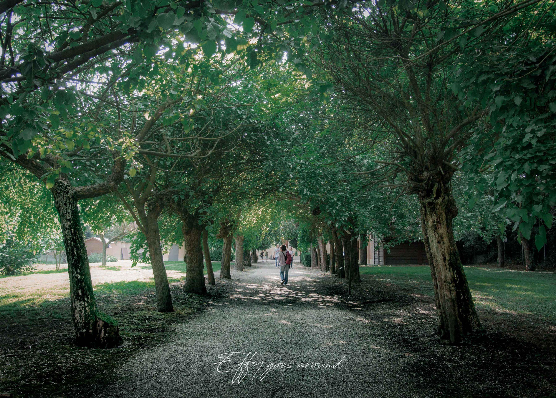 viale alberato al tiro a Segno Nazionale di Ferrara per Interno Verde